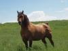 Foals 6