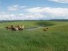 Foals  7